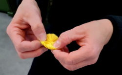 artigianalità campione rosellina